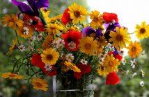Best Flower in the Garden