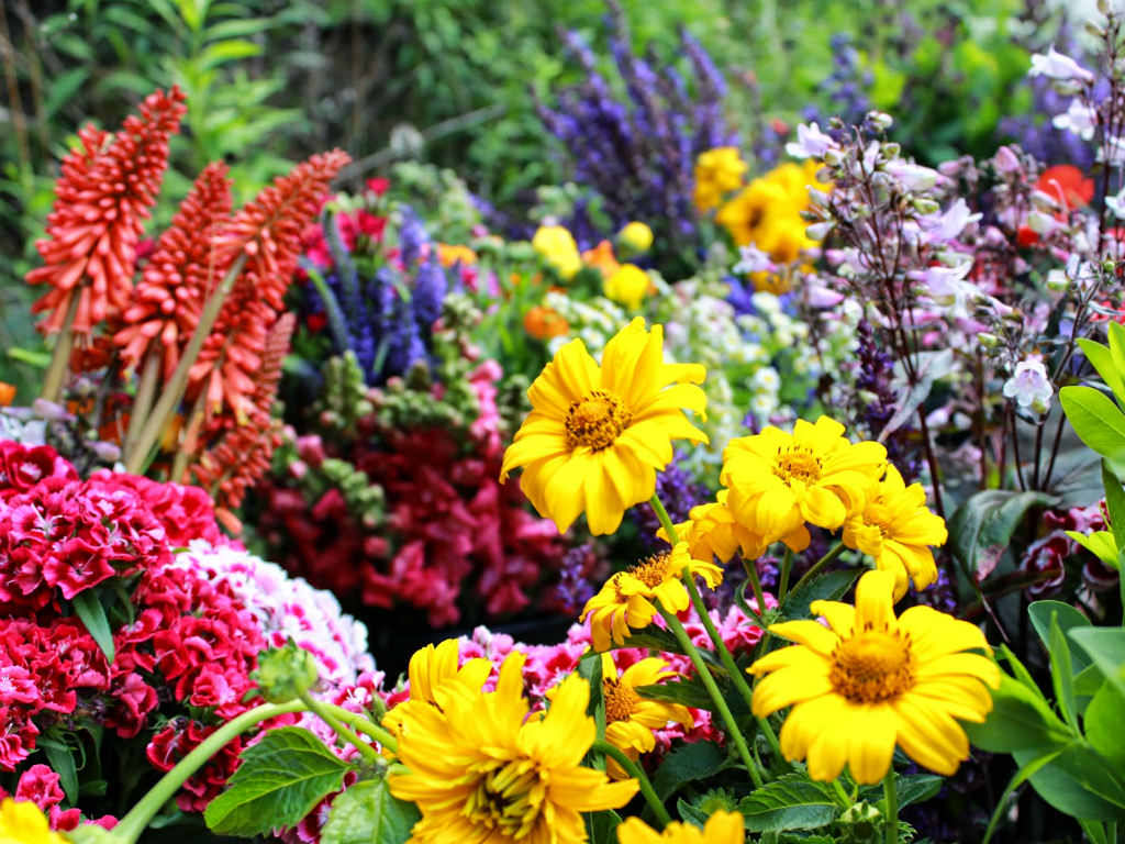 Birth Month Flowers And Their Meanings World Of Flowering Plants