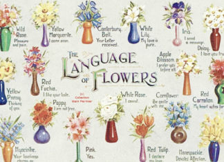 Victorian Flower Language