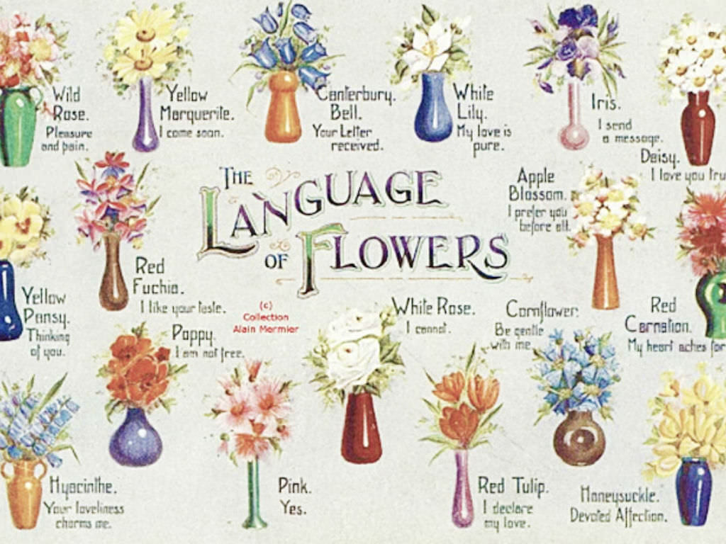 Blooming lips a history of victorian flower language for Flowers that mean life