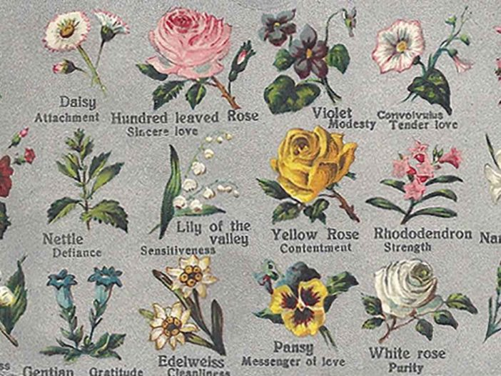 Meaning Of Flowers World Of Flowering Plants
