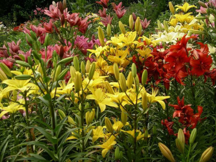 Plants Bloom