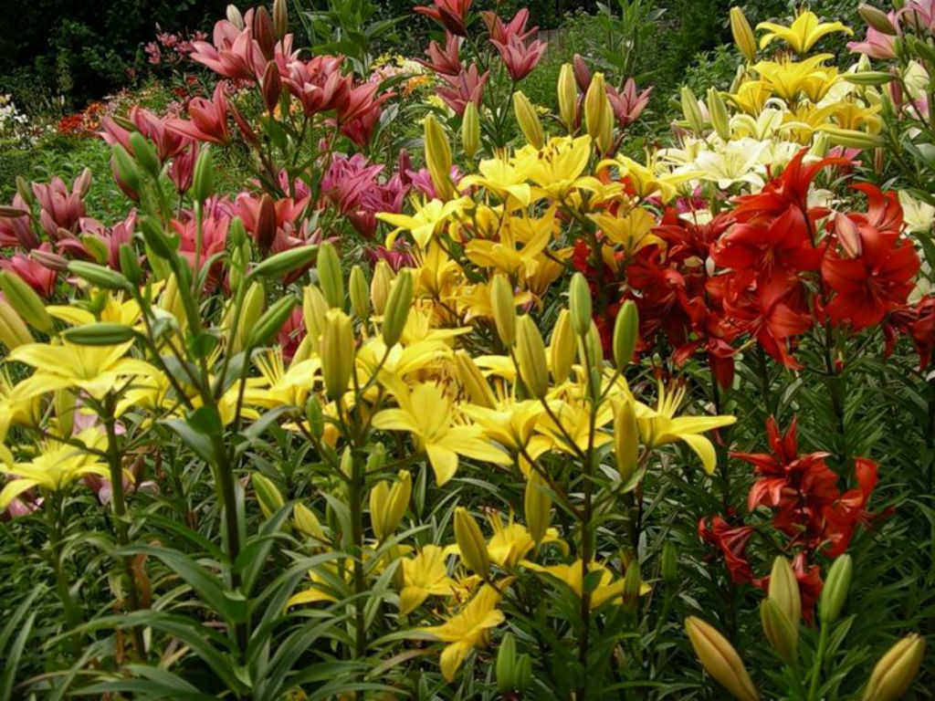 Do all plants bloom world of flowering plants for Easy to care for outdoor flowering plants