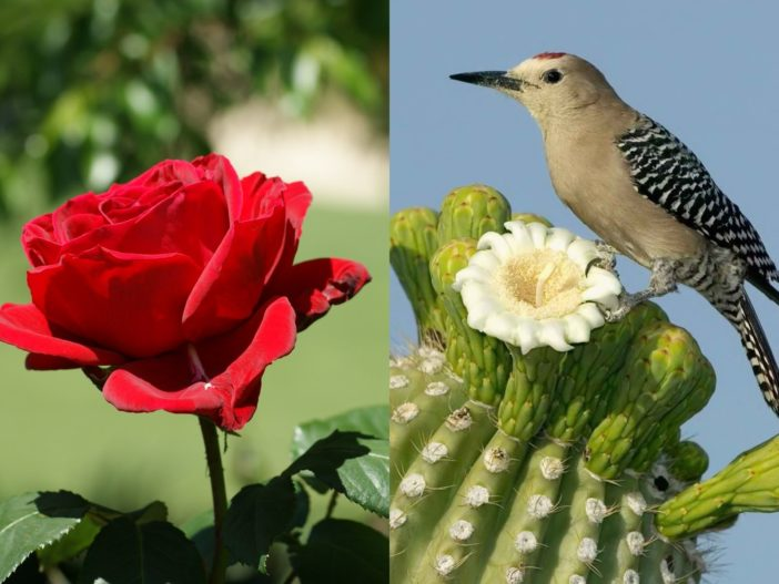 Red Rose and Cactus