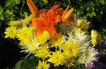 Uses of Flowering Plants