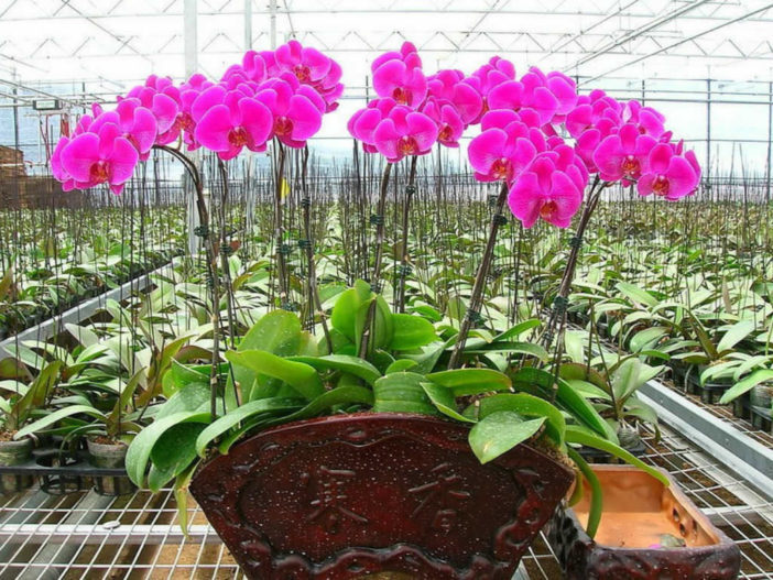 how to take care orchid flowers