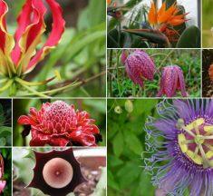 10 Very Unusual Flowers