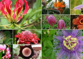 10 Very Unusual Flowers