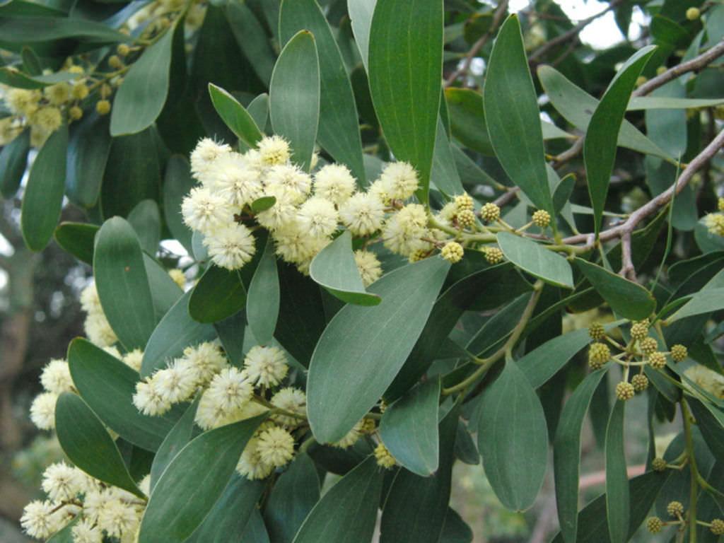 How to Grow Australian Native Plants