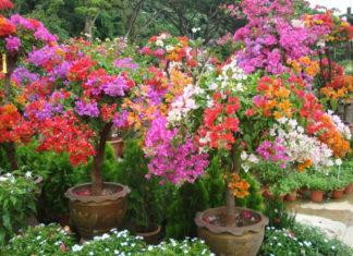 Flowering Plants (Angiosperms)