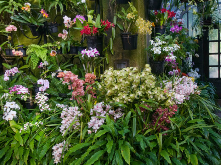 Grow Orchids Indoors