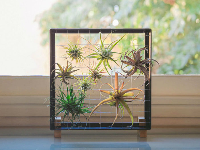 Image result for air plants