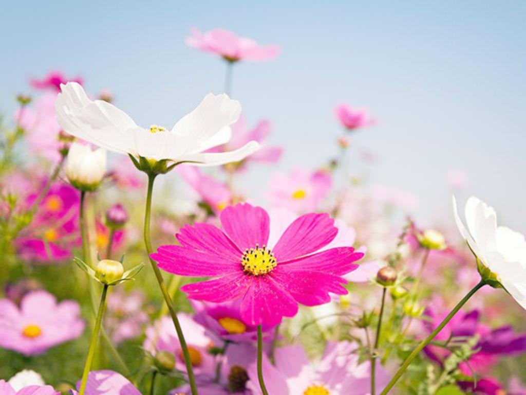 Plants in the daisy family world of flowering plants izmirmasajfo