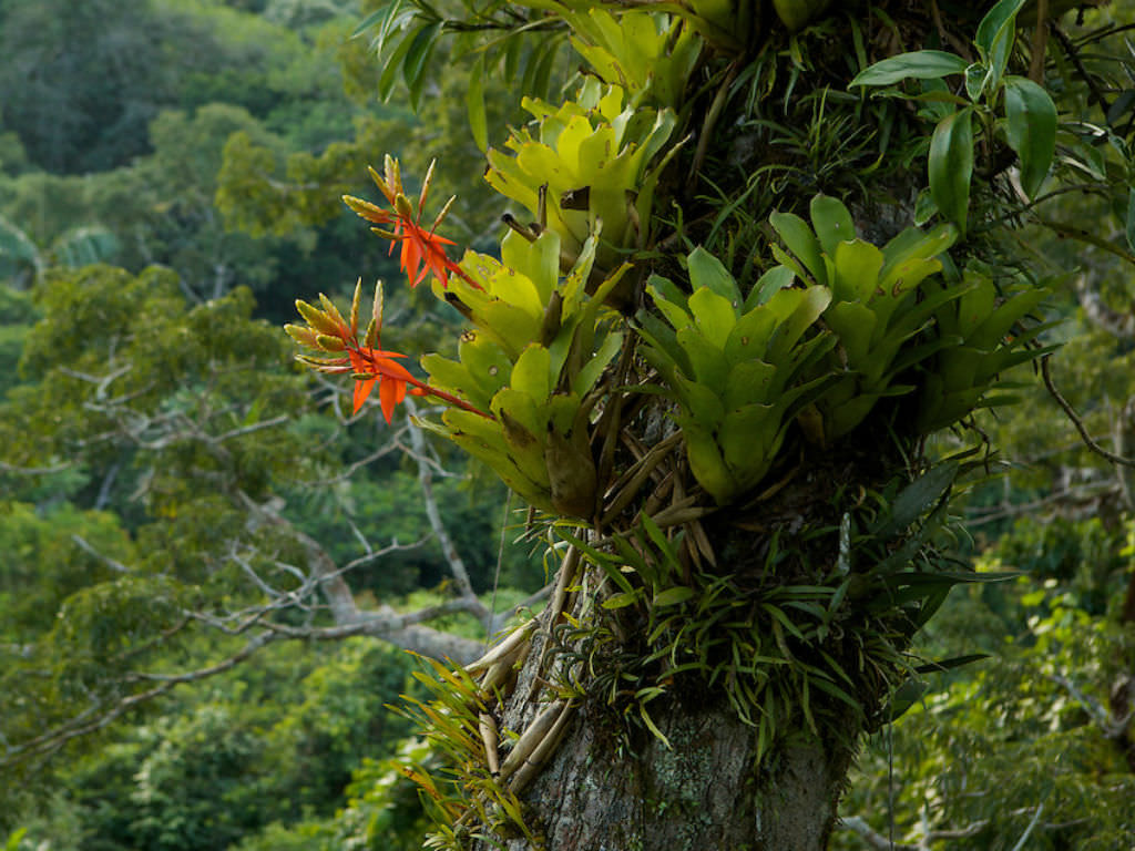 Epiphyte World Of Flowering Plants