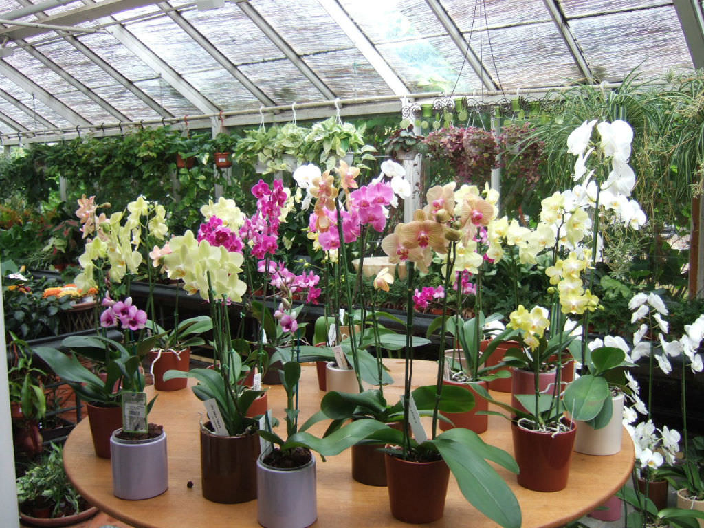 how to raise orchids indoors