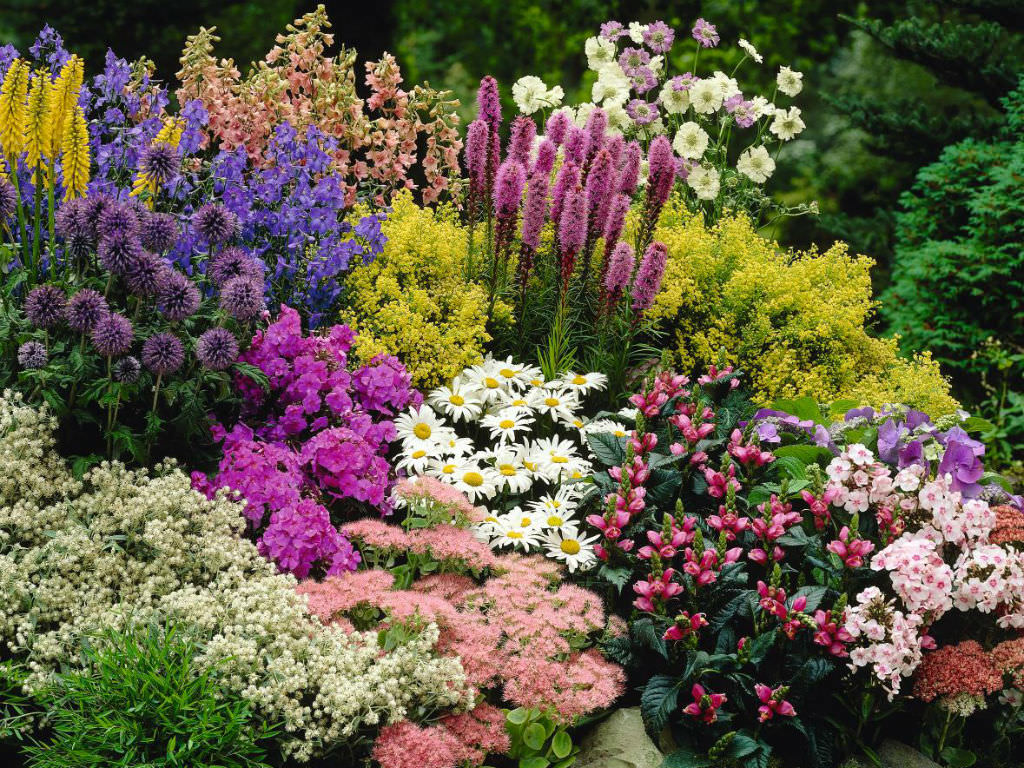 What Is A Perennial Plant World Of Flowering Plants