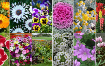 12 Annual Flowers