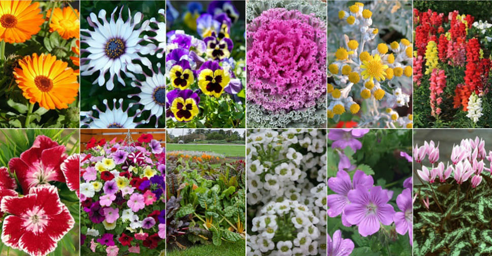 12 Annual Flowers That Can Take The Cold World Of Flowering Plants
