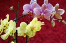 Homemade Potting Soil for Orchids
