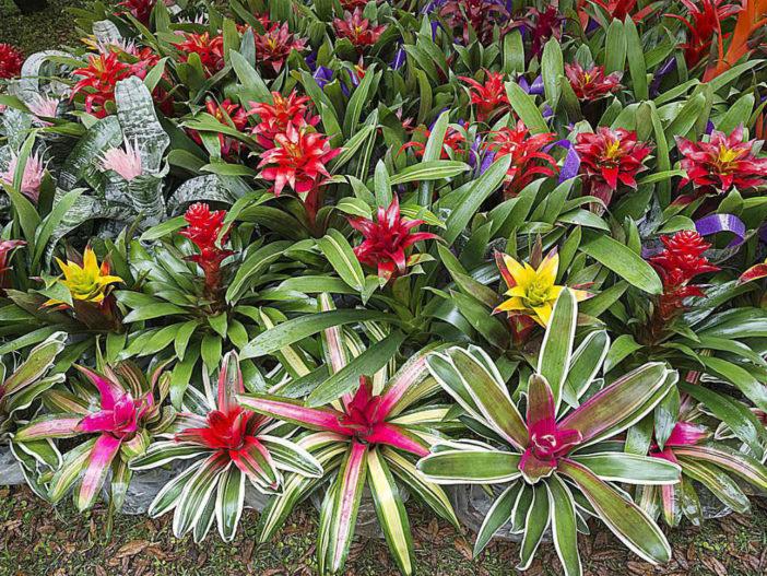 Bromeliads Care