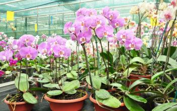 Make Your Own Orchid Fertilizer