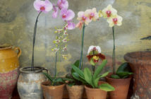 Better Blooming Orchids