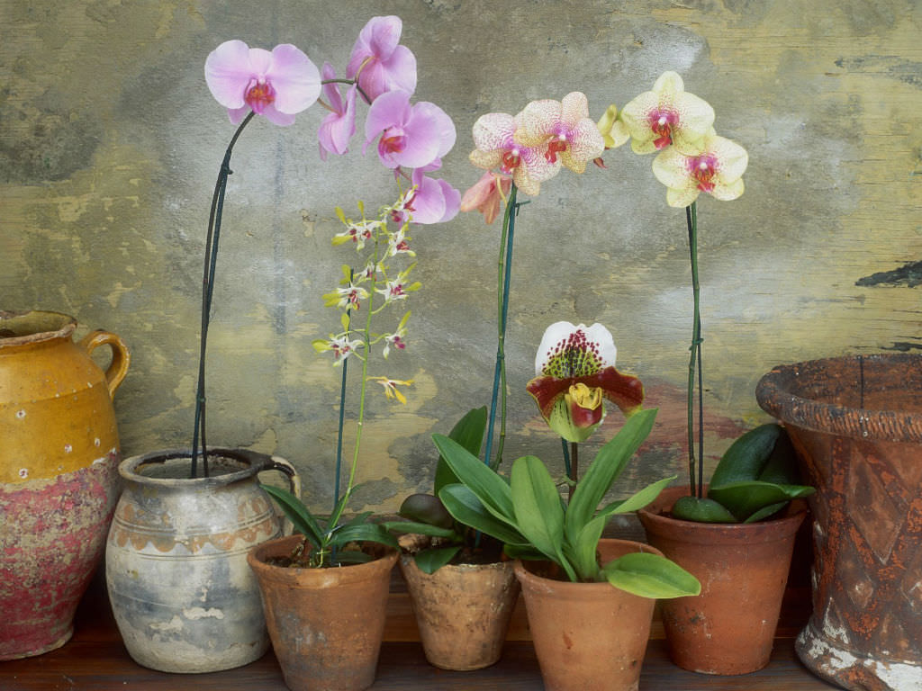 Fertilizer For Better Blooming Orchids World Of Flowering Plants