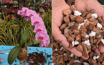 Common Orchid Growing Mediums