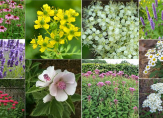 Herbs That Blossom Into Stunning Flowers