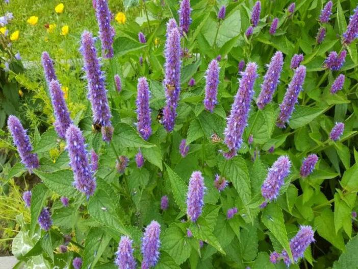 Garden Bush: 10 Herbs That Blossom Into Stunning Flowers