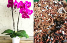 Potting Soil for Moth Orchids (Phalaenopsis)