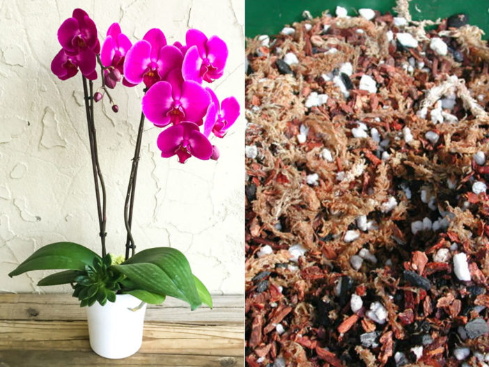 Potting Soil for Moth Orchids (Phalaenopsis)