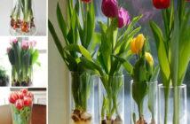 Grow Tulips in Water